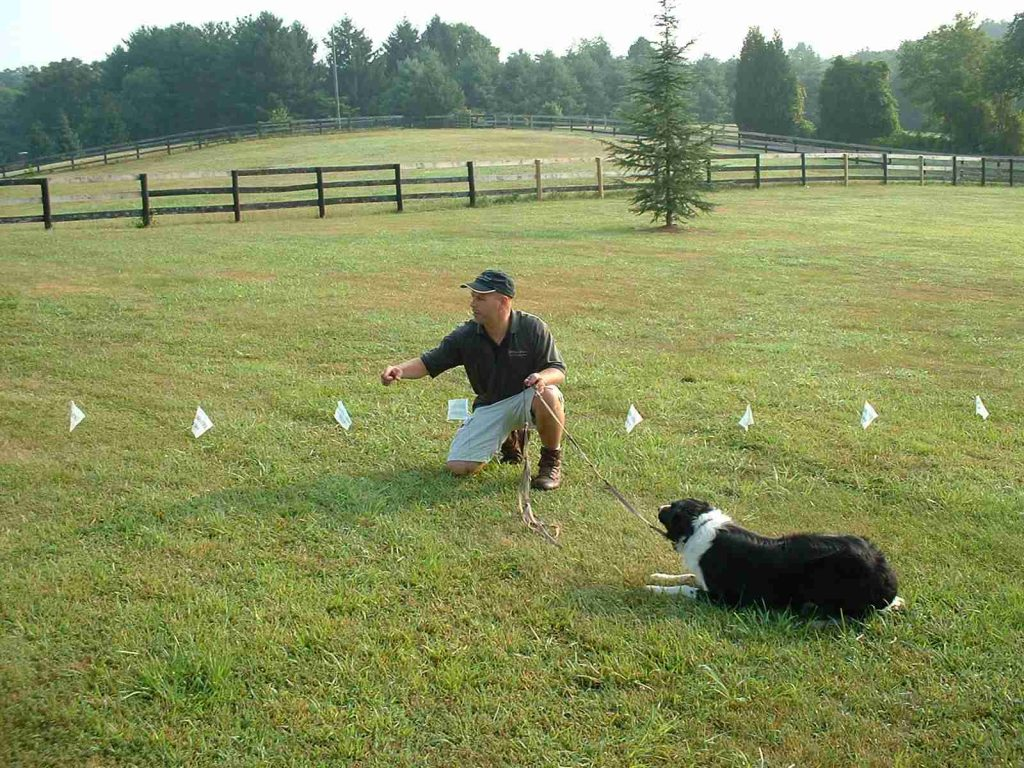 Electronic-Dog-Fencing-Restrain-A-Dog-With-Invisible-Pet-dog-electric-fence-above-ground